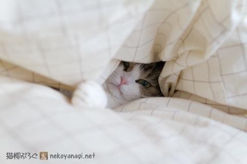bed120201_2.jpg