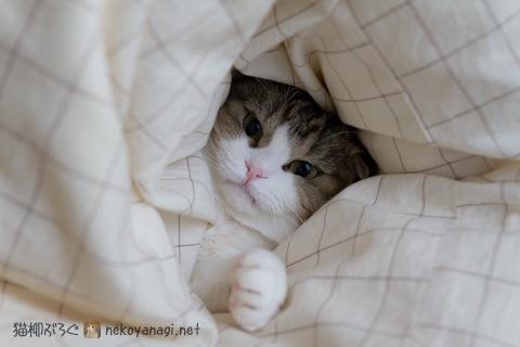 bed120201_3.jpg