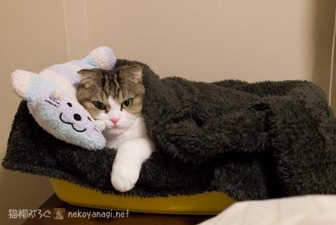 pillow120209_2.jpg