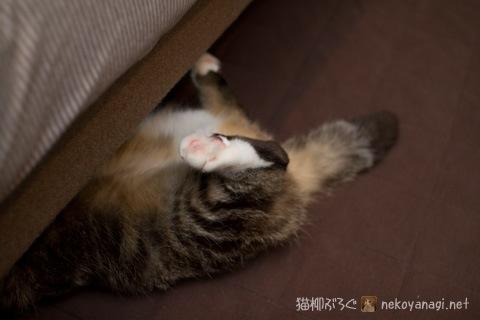sofa120302_1.jpg