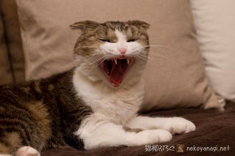 yawn120303_1.jpg