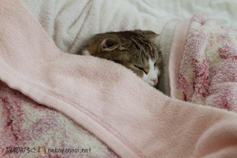 bed120307_1.jpg