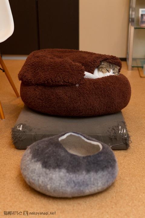 一筋縄にはいかない猫