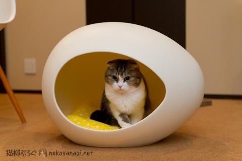 egg120313_1.jpg