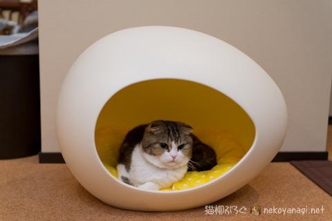 egg120313_3.jpg