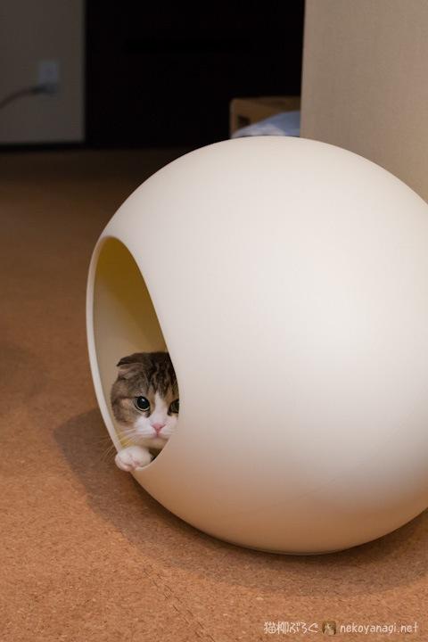 egg120321_1.jpg