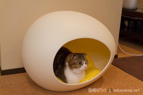egg120331_1.jpg