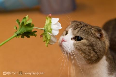 flower120316_1.jpg