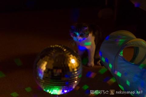 disco120420_2.jpg