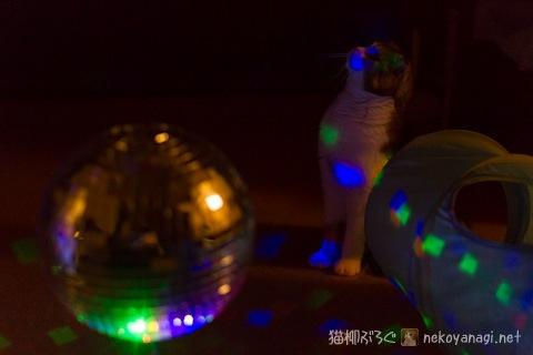 disco120420_3.jpg