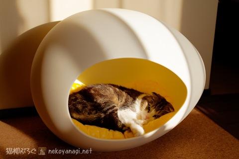egg120409_1.jpg
