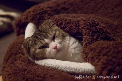sleepy120411_1.jpg