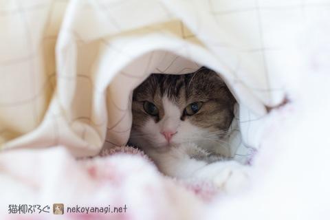 bed120511_1.jpg