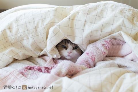 bed120511_2.jpg