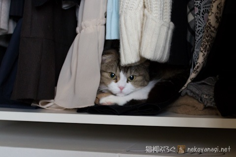closet120519_1.jpg