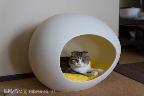 egg120515_1.jpg