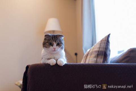 sofa120508_1.jpg