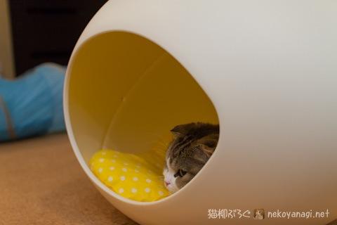 egg120603_1.jpg