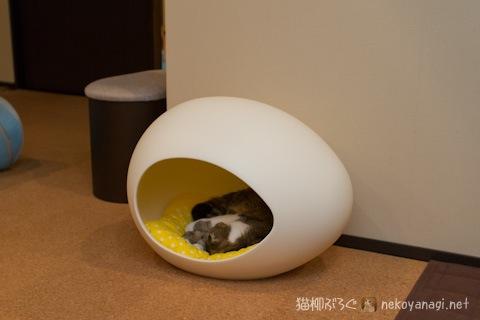 egg120603_2.jpg