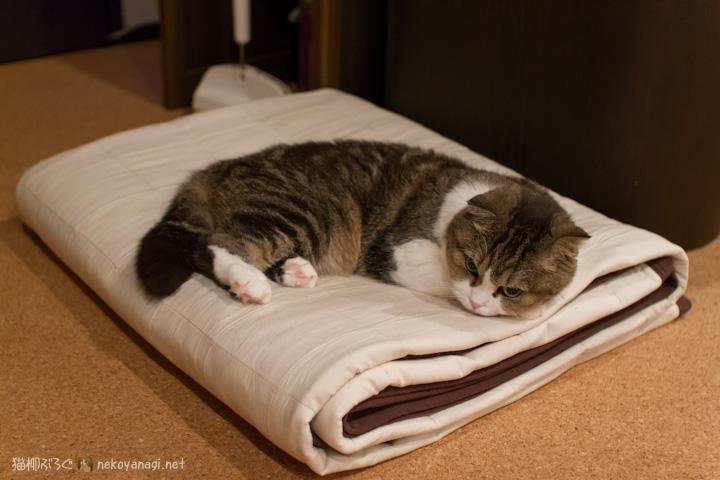 ベッドじゃないけど