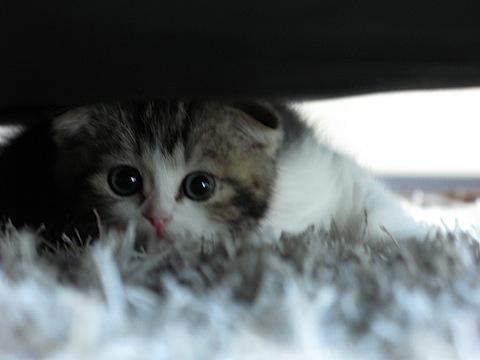2日目の猫柳