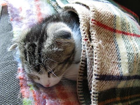 布団でおやすみ