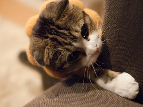 猫柳の順応性