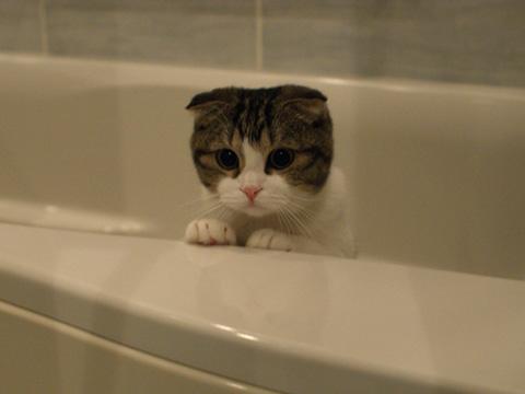 bath081212_1.jpg