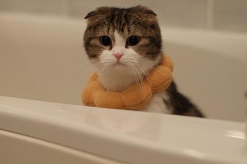 bath091021_1.jpg