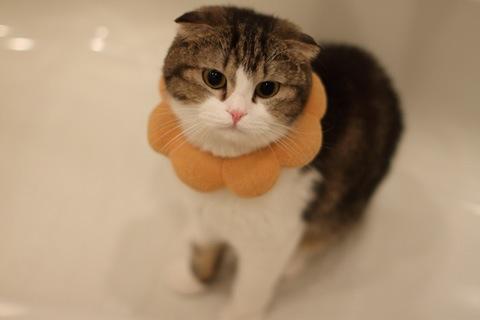 bath091021_2.jpg