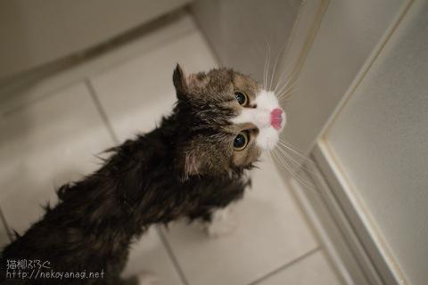 bath100411_1.jpg