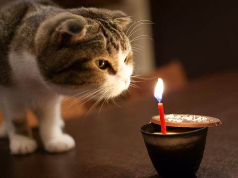 birthday090304_4.jpg