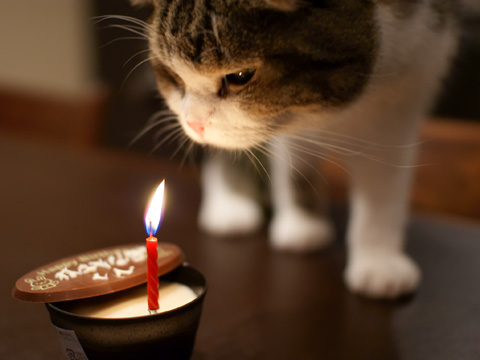 birthday090304_5.jpg