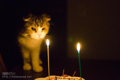 birthday100304_1.jpg
