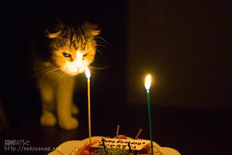birthday100304_2.jpg