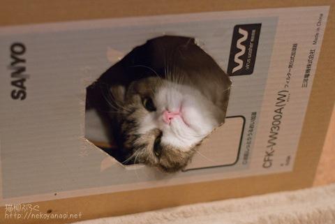 box100419_1.jpg