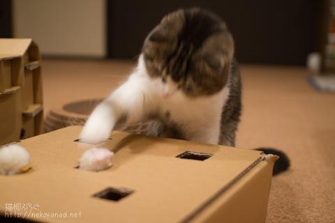 box100421_2.jpg