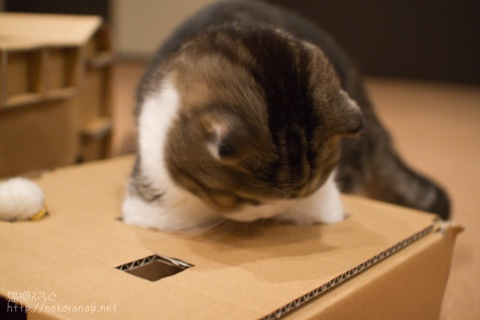 box100421_3.jpg