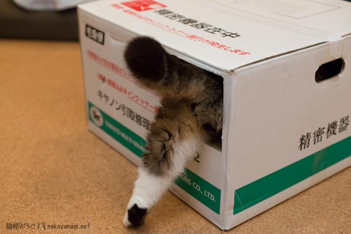 キヤノン箱