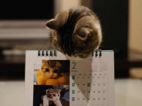 calendar081130_2.jpg