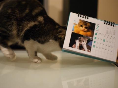 calendar081130_3.jpg
