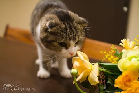 flowers100110_2.jpg
