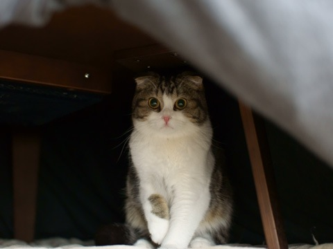 kotatsu090301_1.jpg