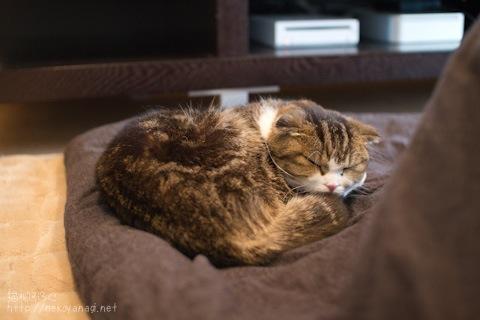 kotatsu100328_4.jpg
