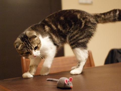 mouse081107_3.jpg