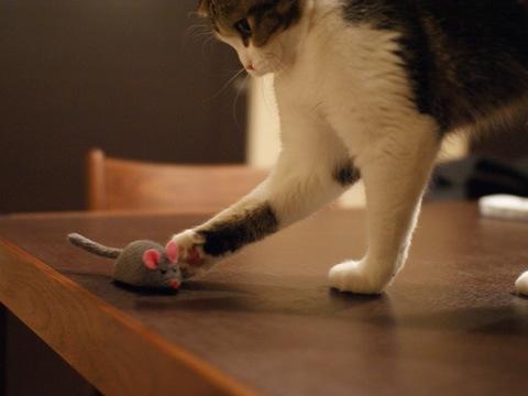 mouse081107_4.jpg