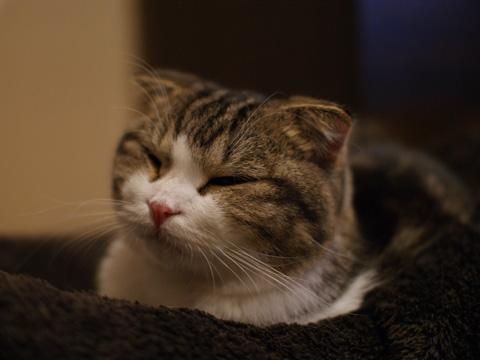 sleepy081217_3.jpg