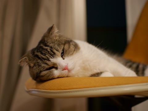 sleepy090622_2.jpg