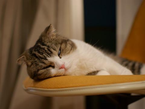 sleepy090622_3.jpg