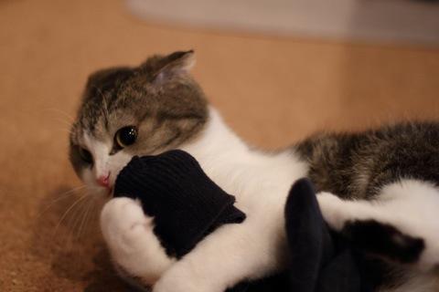 socks091019_2.jpg